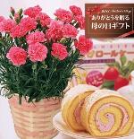 【送料無料】ピンクカーネーション5号鉢と苺ロールケーキのセット【母の日ギフトお届5/4-5/8】